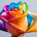 LGBTQ Washington County Hudson Falls, Ny